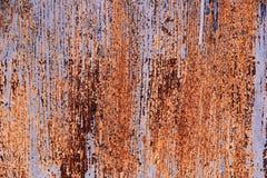 Puerta del metal en moho Imagenes de archivo