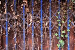 Puerta del metal en moho y plantas Foto de archivo libre de regalías