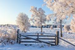 Puerta en el pasto en invierno Imagen de archivo