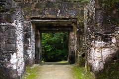 Puerta maya del piramide en Tikal Guatemala Imágenes de archivo libres de regalías