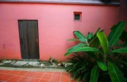 Puerta roja, follaje del plátano Imagen de archivo libre de regalías