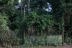 Puerta verde demasiado grande para su edad con la hiedra imagen de archivo libre de regalías