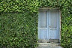 Puerta vieja con las paredes de las plantas Foto de archivo libre de regalías