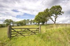 Puerta y cerca de madera viejas en un campo verde Fotografía de archivo
