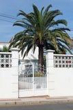 Puerta y palmera blancas Fotos de archivo libres de regalías