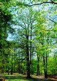 Puertas en bosque de la primavera foto de archivo libre de regalías