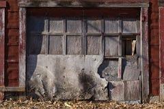 Puertas resistidas del garaje Imagen de archivo libre de regalías