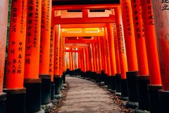 Puertas rojas del torii en la capilla de Fushimi Inari en Kyoto, Japón Fotos de archivo libres de regalías