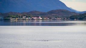 Puerto伊甸园在智利峡湾,巴塔哥尼亚 村庄的细节 库存图片
