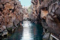 Puerto Ayora, de Galapagos, Ecuador - November 25, 2018: Toeristen die in Las Grietas op Santa Cruz Island in de Galapagos zwemme royalty-vrije stock fotografie