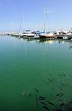Puerto Banus, Costa del Sol, Spanien Arkivbilder