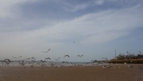 Puerto de Essaouira del paisaje Fotos de archivo
