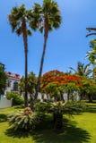 Puerto de Mogan, Gran Canaria. Park in Puerto de Mogan, Gran Canaria Royalty Free Stock Images