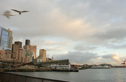 Puerto de Seattle en la puesta del sol con las gaviotas enmascaradas Foto de archivo libre de regalías