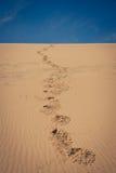 Puerto del bocadillo, Namibia Fotografía de archivo
