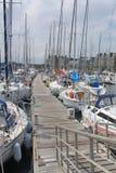 Puerto del isYacht de la flor de la ave del paraíso en Saint Malo en Bretaña, Fraolated en el fondo verde, flor tropical, reginae Foto de archivo libre de regalías