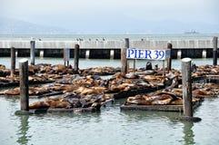 Puerto deportivo de San Francisco Fotos de archivo
