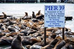 Puerto deportivo de San Francisco Imágenes de archivo libres de regalías