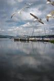 Puerto deportivo del lago summer foto de archivo libre de regalías