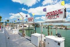 Puerto deportivo del puerto de la ballena Foto de archivo libre de regalías