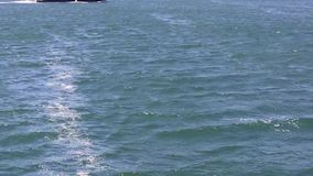 Puerto deportivo Gold Coast Australia de Southport almacen de metraje de vídeo