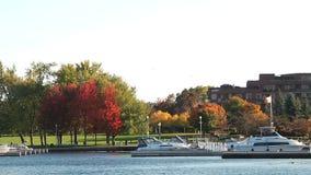 Puerto deportivo hermoso, barcos y árboles rojos almacen de metraje de vídeo