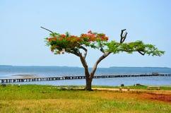 Puerto Esperanza fotografia de stock