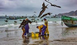 Puerto Lopez, эквадор - 12-ое сентября 2018 - птицы роится ищущ легкая еда как рыболовы очищает вверх в конце a стоковые фотографии rf