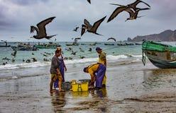 Puerto Lopez, эквадор - 12-ое сентября 2018 - птицы роится ищущ легкая еда как рыболовы очищает вверх в конце a стоковые фото