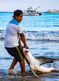 Puerto Lopez, Ecuador / Aug 19, 2016: Fisherman drags a dead shark onto the beach for processing. In Puerto Lopez, Ecuador royalty free stock photos