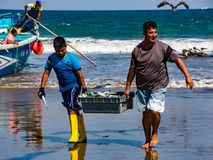 Fishermen carry bins of fish to buyers, chased by birds looking Stock Photos