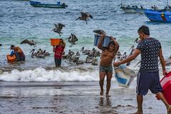 Puerto Lopez, Ecuador - September 12, 2018 - man carried bin of fresh fish from boat to waiting ice truck wholesale. Puerto Lopez, Ecuador - September 12, 2018 stock images