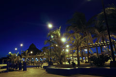 Puerto Morelos night palm trees Mayan riviera Stock Image