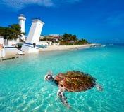 Puerto Morelos turtle photomount Riviera Maya. Puerto Morelos turtle photomount in Riviera Maya at Mayan Mexico stock image
