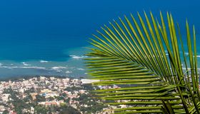 Puerto Plata | Tropical leaf under the Dominican sunlight royalty free stock photo