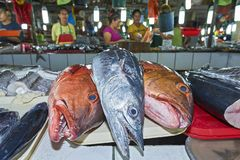 Big sized fish at the Central Wet Market in Palawan, Philippines royalty free stock photo
