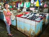 Vendors selling small blue tuna fish at an asian fish market stock photography