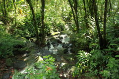 Puerto Rican rain forest Royalty Free Stock Photo