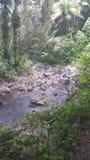 Puerto Rican Rainforest stock photos