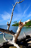 Puerto Rico Beach 1. Driftwood on the beach near Mayaguez Puerto Rico Royalty Free Stock Photos