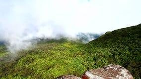 Puerto Rico El Yunque las państwowy zbiory