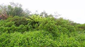 Puerto Rico Foggy Rainforest stock footage