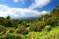 Puerto Rico Forest. Beautiful view of the lush tropical forests of Puerto Rico Stock Photos