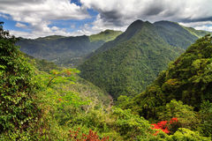 Puerto Rico forest hills. Amazing view over the jungle forests in the hills of central Puerto Rico in summer royalty free stock photography