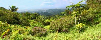 Puerto Rico Forest Landscape Stock Image