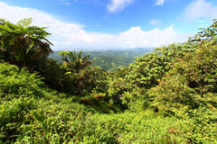 Puerto Rico Forest Landscape Stock Photography
