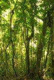 Puerto Rico Rainforest Lizenzfreie Stockbilder
