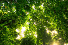 Puerto Rico Rainforest Lizenzfreie Stockfotos