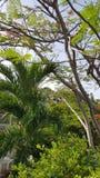 Puerto Rico tropiska blom arkivfoto