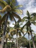 Puerto Vallarta royalty-vrije stock foto
